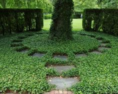 Ground cover, garden, design, plants, planting, biodiversity, insects