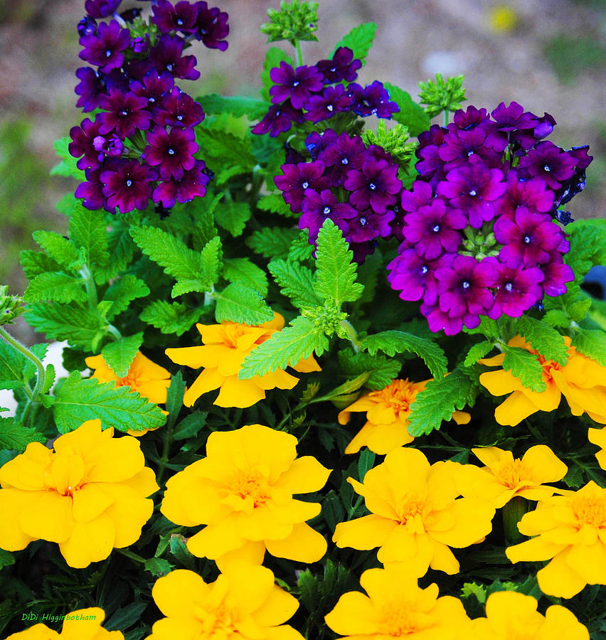 Six Effects Of Plant Colour How Does It Make You Feel