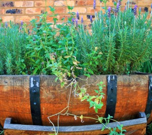 Lavender, herbs, growing, grow your own, garden, health