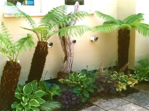 Tree ferns, shade, shelter, garden, planting, plants, right plant, right place