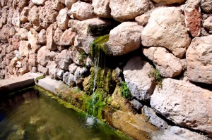 Water, garden, pond, sustainable, xeriscaping, collection, drainage, swales, rain