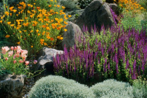 drought tolerant, plants, gardens, design, TV, trends, gardening