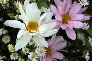 Flowers for picking, flowers, cut, cut flowers, home, interior, vase, garden, growing