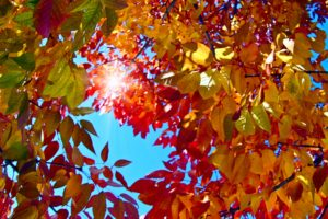 autumn, leaves, colour, spectacle, red, orange, yellow, leaves, seasonal, interest, fall