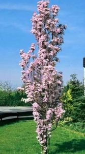 Ten Trees Suitable For Small Gardens It 39 S Time To Plant Perfect Plants