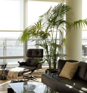 indoor, palm, house plant, houseplant, plant, design, interior, decor, furnishings