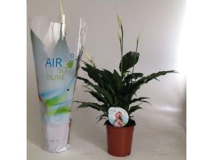 peace lily, lily, jungle, plant, houseplant, house plant, interior design, decor
