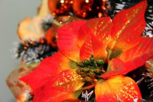 Poinsettia, red, yellow, glitter, plants, festive plants, Christmas, gift, present.
