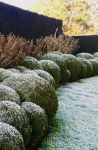 frost, November, garden, frost in the garden, the November garden, structure in the garden, planning your garden, perfectplants.co.uk,