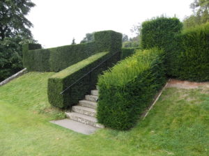 Yew, hedge, evergreen, Taxus baccata, trimming, pruning, hedging