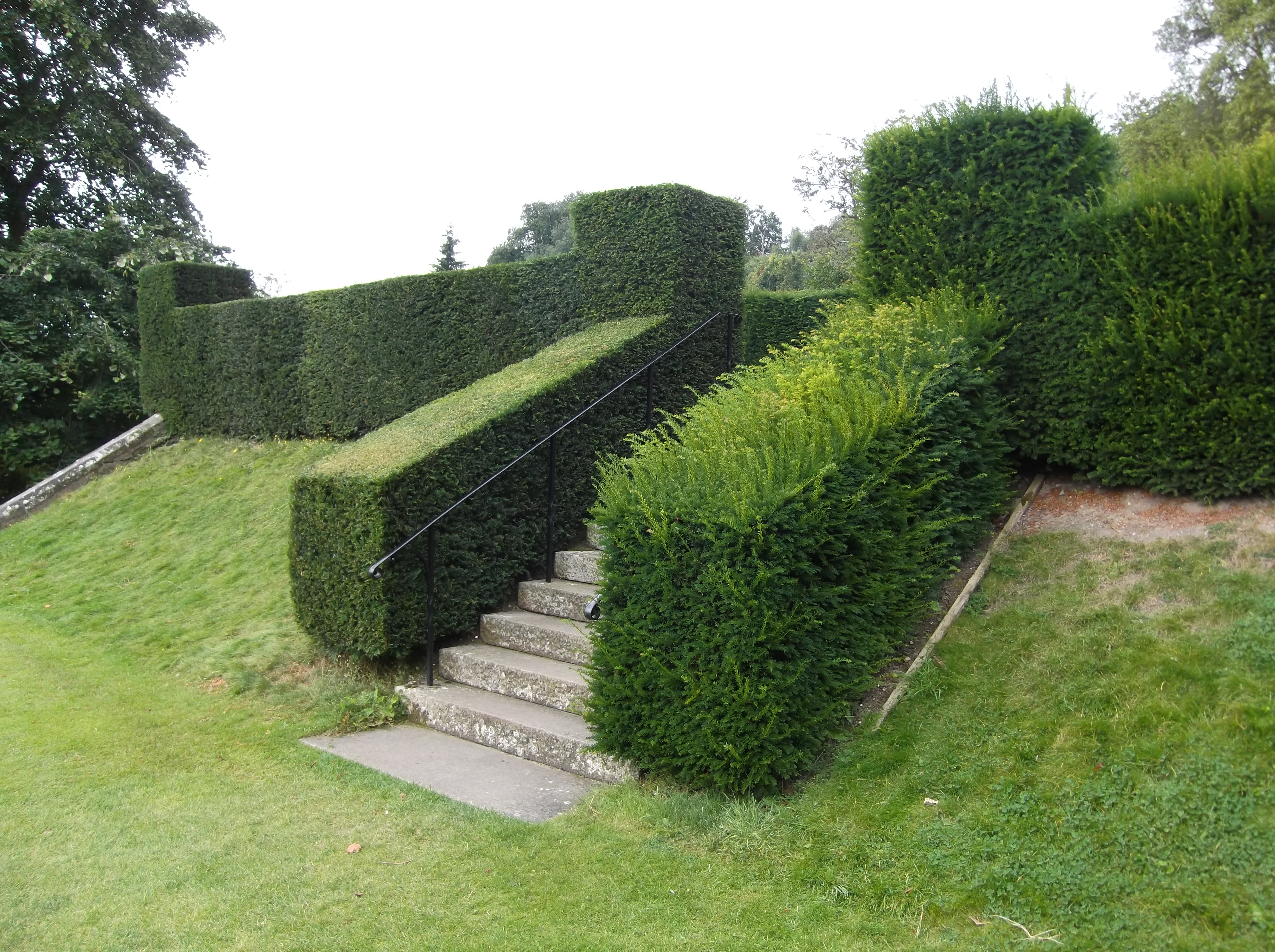 Hedge Bushes: 10 Things To Do In The January Garden.