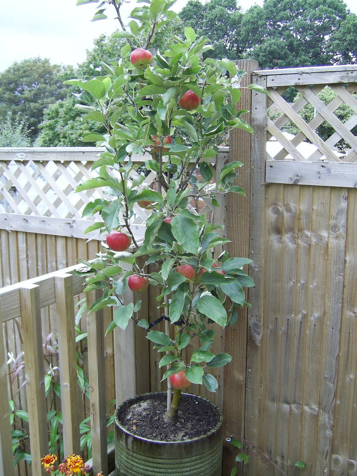 Feeling fruity. There's a fruit tree for every garden ...