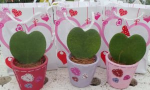 Hearts, heart, plant, foliage, heart-shaped, Valentines, February, love, gift, present, growing, February