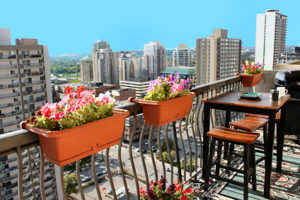 balcony, planting, flowers, high rise, apartment, gardening in small spaces, gardening on a balcony, plants, planting, gardening
