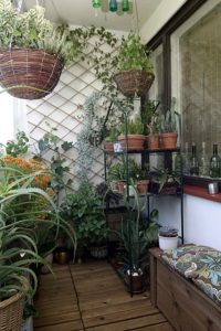 balcony planting, plants, gardening, gardening in a small space, perfect plants, perfectplants.co.uk, courtyard