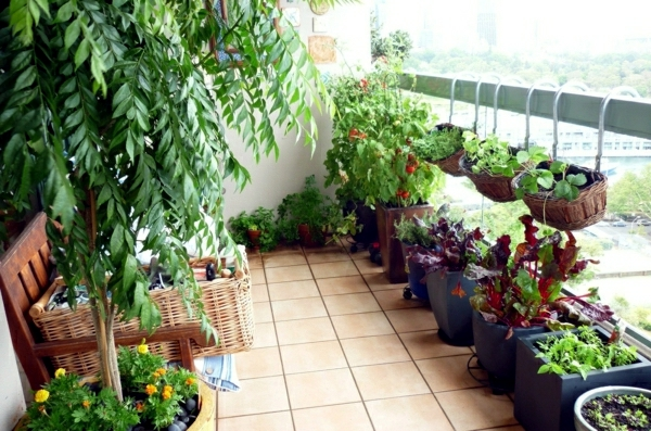 What Plants Can I Put On My Balcony Buy Trees Shrubs