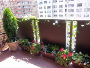 balcony, growing, plants, vegetables, flowers, high rise, gardening, how to grow plants on a balcony