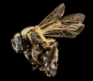 bees, vegetables, pollination, fruit, flowers, pollen, fertilisation, courgettes, beans, gardening, vegetables, growing, grow your own,