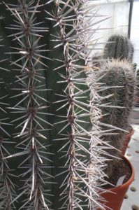 cacti, cactus, plants, house plants, architectural, planting, outdoors, garden, gardening, tv, trends,