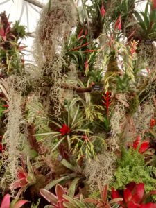 Tillandsia, Bromeliad, house plants, group planting, en-masse, Chelsea Flower Show, 2017, RHS, perfectplants.co.uk
