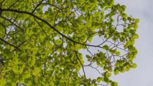 shade, tree, leaves, branches, summer, garden, sit, relax, heat, shady, plants, seating, seat,