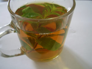 mint, fresh mint, tea, peppermint, garden mint, garden, insect, bugs, repel, insect repellent,
