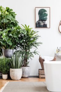 trend, plants, interior design, house plants, garden, gardening, style, home, interior, architect,
