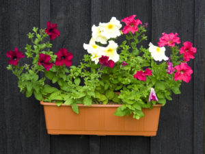plastic pots, history of gardening, plants, flowers, growing, gardening, garden, perfectplants.co.uk,