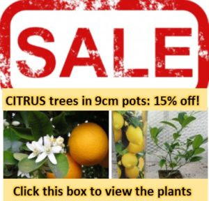citrus, lemon, trees, citrus tree, lemon tree, insect repellent, bugs, garden, gardening,