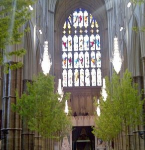 westminster abbey, interior design, trees, hornbeam, field maple, acer campestre, plant decorator, plants, wedding, party, flower arranging,