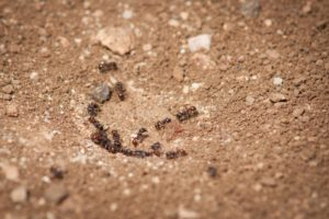 ants, pests, garden, honey, insects, biodiversity, food chain, gardening, chemicals, killing,