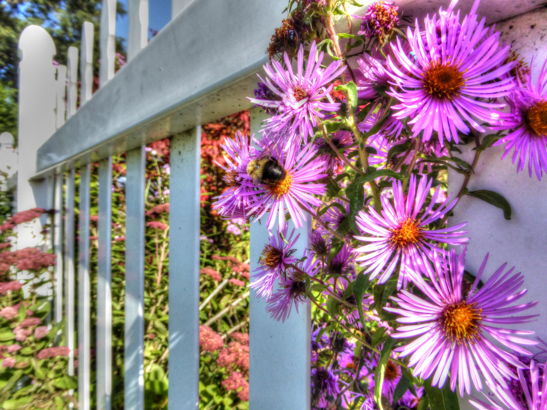 7 Plants To Make A Rainbow Coloured Garden In August And September