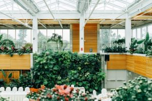 plants, house plants, office plants, working, space, health, happiness, tiles direct, perfectplants.co.uk, indoors, greenery, plants for the office, larger plants,