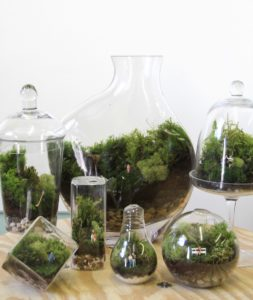 terrarium, indoor gardening, gardening, house plants, houseplants, interior design, homes, decoration, living art,