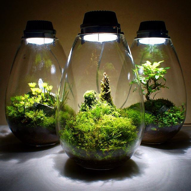 6 Reasons Why You Want To Garden In Terrarium Avoid These Mistakes
