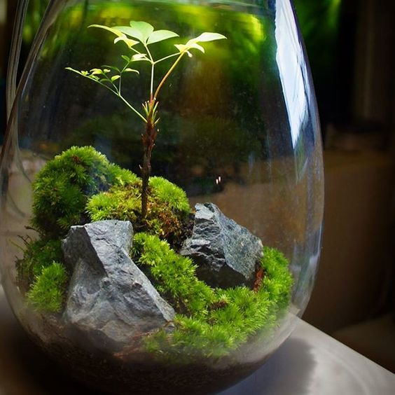 6 Reasons Why You Want To Garden In Terrarium Avoid These