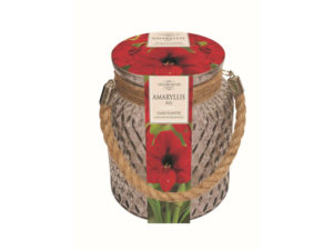 growing kit, amaryllis, bulb kit, xmas shopping, xmas, christmas, presents, plants, perfectplants.co.uk,
