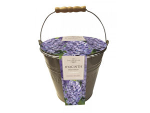 growing kit, bulbs, hyacinth, bucket, gift set, gift, christmas shopping, christmas, xmas, gardening, perfectplants.co.uk,