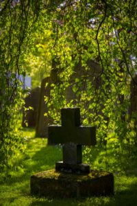 ivy, hedera, luck, superstition, growing, graves, mystical, mythology, plants, ivy grows on a grave,