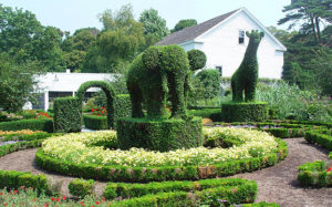 topiary, front garden, fashion, gardening, clipped hedges, formal, gardens,