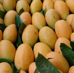 Plango fruit, plango, hybrid fruit, mango, plum, grow your own, unusual fruit, fruit tree,