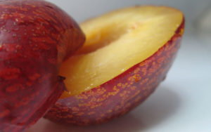 new fruit, fruit cross, pluot, plum, apricot, weird fruit, grow your own, strange fruit, hybrid fruit,
