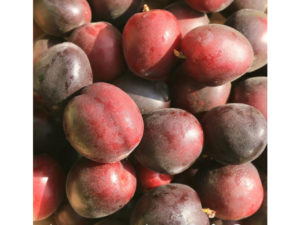 Prunus Aprium 'Aprisali', weird fruit, apricot plum cross, apricot, plum, fruit tree, unusual fruit, plant a fruit tree,