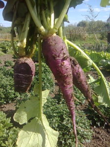 grow your own, allotment, community gardening, orchard, vegetables, growing, gardening,