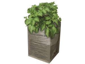 potato, potato grow bag, grow your own, allotment, vegetable patch, garden, gardening, growing,