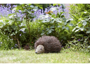 hedgehog, garden ornament, spike the hedgehog, decorative garden, gardening,
