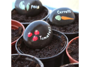 painted stone, painted pebble, crops, vegetables, grow your own, growing, gardening, garden, perfectplants.co.uk
