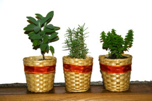herbs, rosemary, thyme, sage, oregano, kitchen, kitchen garden, food, cooking, aromoatic, gardening,