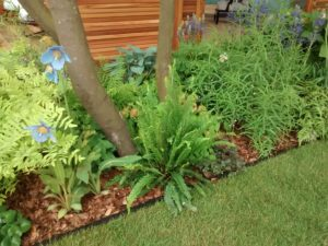 lawn, edge, edging the lawn, trim, grass, gardening, garden, maintenance, perfectplants.co.uk,