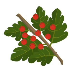 crataegus, hawthorn, wildlife, biodiversity, garden, planting, tree, growing, habitat, berries, haws,